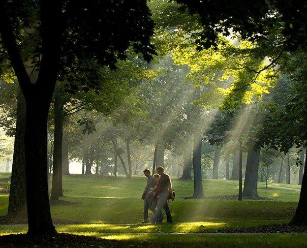 Sun coming through trees in Oak Grove